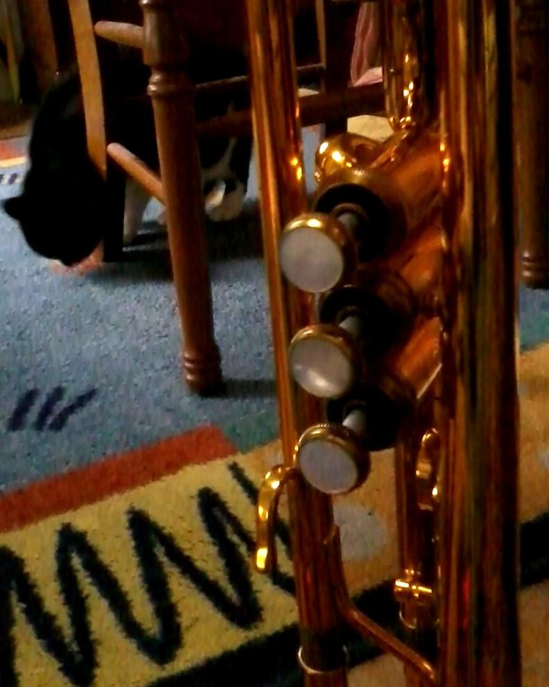 Chat à la trompette