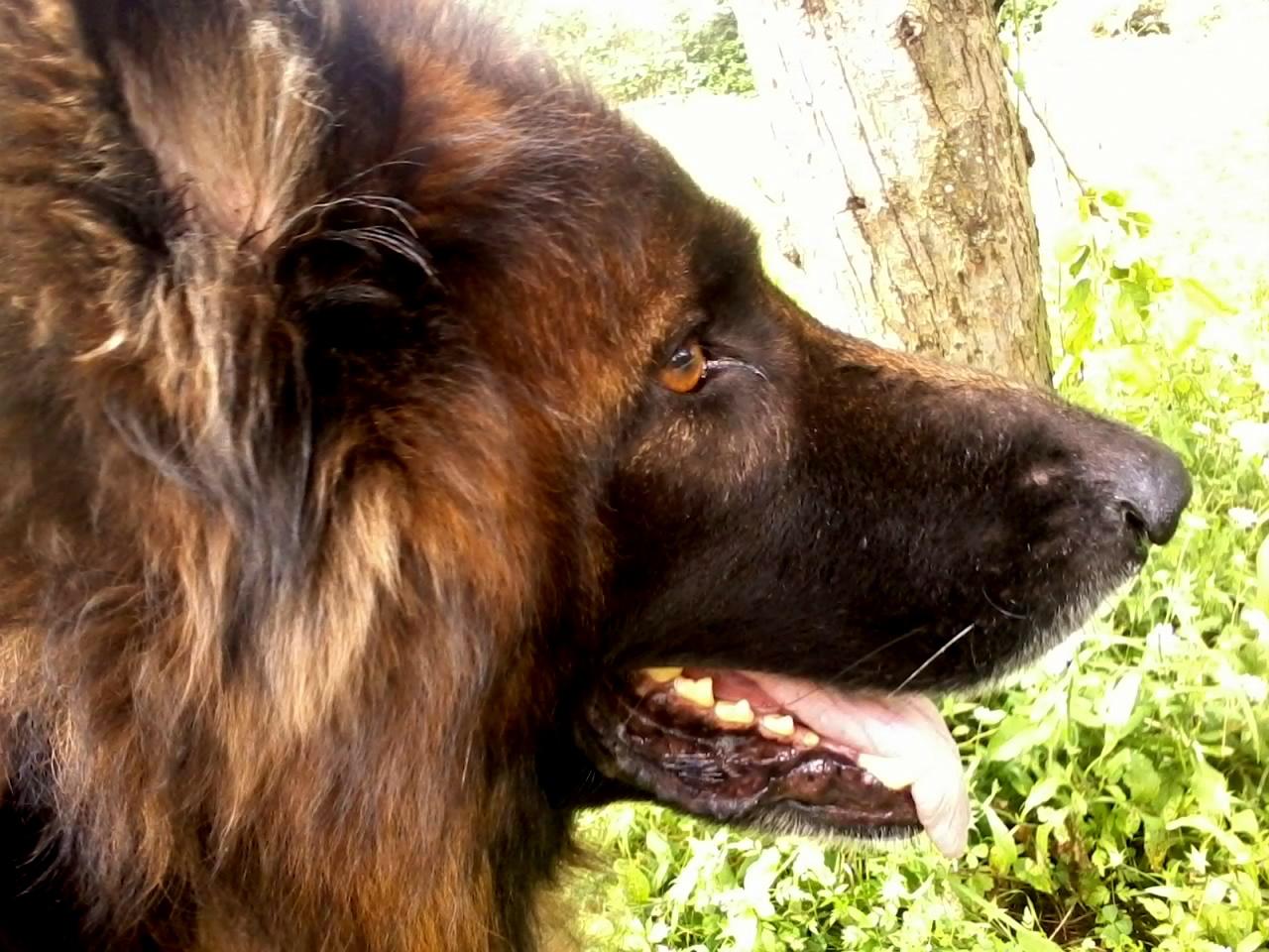 Dax profil