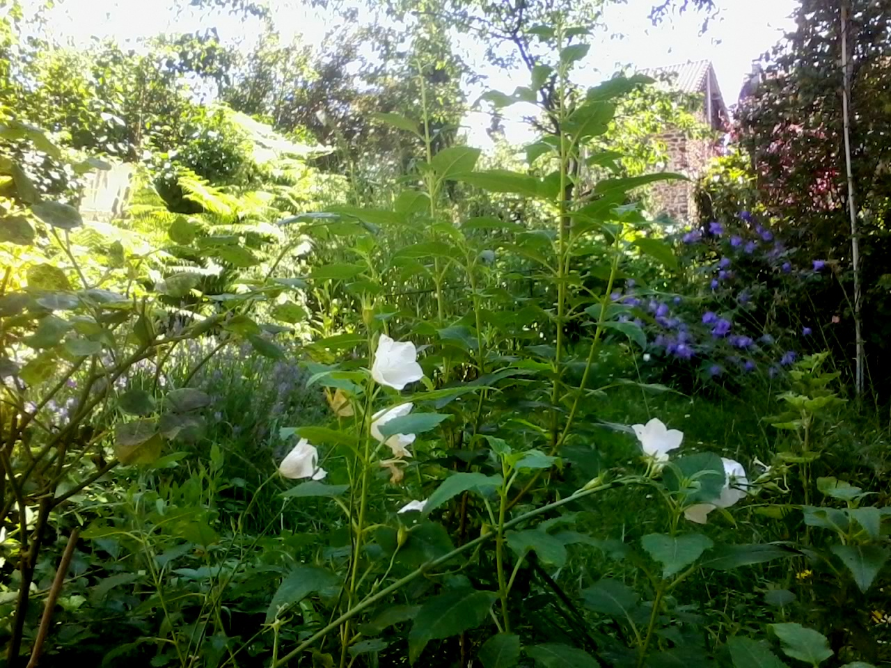 Jardin d'Aulnay-sous-Bois