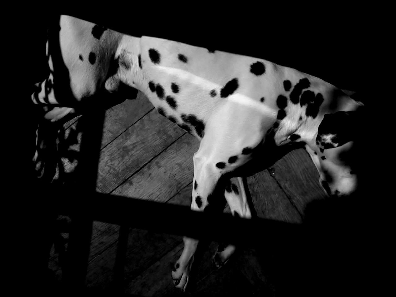OMbres et lumières canines